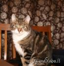 Name: Runa. Pet species: cat.  Runa.-Graži?-Labai!  Views: 105817